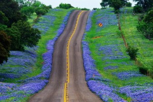bluebonnet-highway